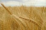 Kollyva med Hvete